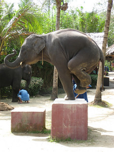 elephant_show_23