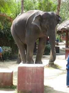 elephant_show_17