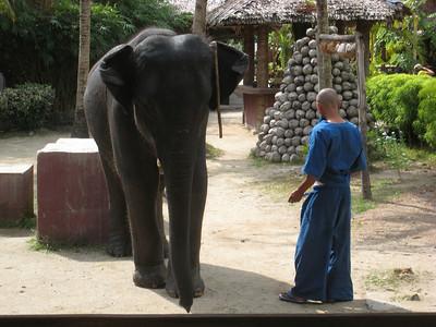 elephant_show_02