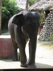 elephant_show_03