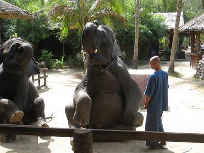 elephant_show_09