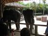 elephant_show_06