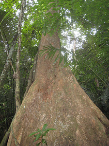 tree_bottom_2