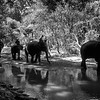 Elephants and Keepers #5 - Chiang Mai, Thailand