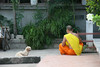 Monk dog chat