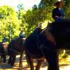 Elephants and Keepers #6 - Chiang Mai, Thailand