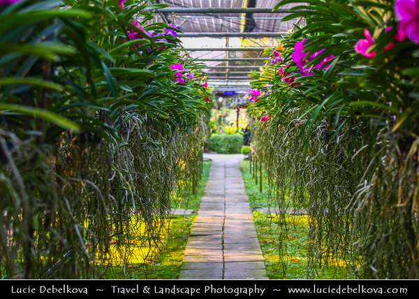 Thailand - Chiang Mai - Butterfly and Orchid Farm
