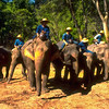 Elephants and Keepers #1 - Chiang Mai, Thailand
