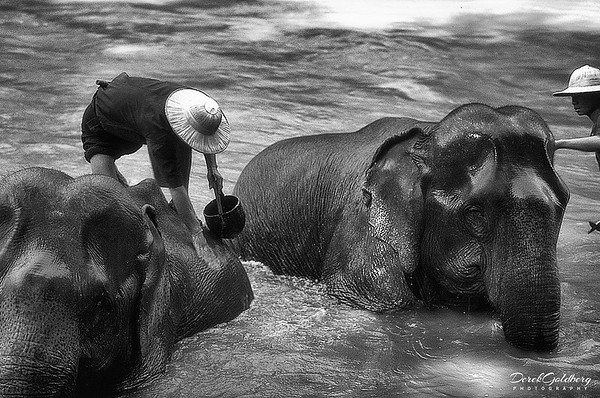 Bathing Elephanst #8 - Chiang Mai, Thailand