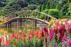 The garden and the bridge