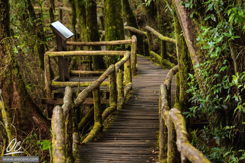 Path in the cloud forest