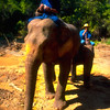 Elephants and Keepers #4 - Chiang Mai, Thailand