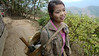 On the way to work in the tea fields, a 20 year-old stops to chat. Kalaw region