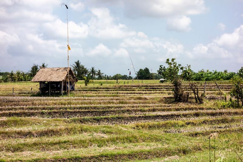 Bali Farm And Rice Paddies