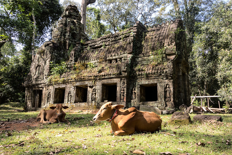 Preah Khan Building With Cow