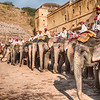 Elephants At The Amber Fort