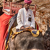 Elephant Rider At The Amber Fort