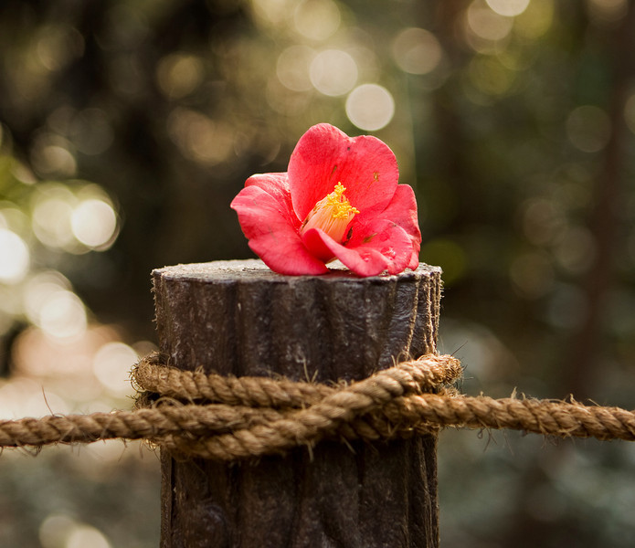 A red flower left on top of a wood post. This marked the edge of a path in a Tokyo park and appears to have been left on this and several nearby posts for decoration.