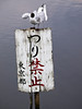 "A seagull is preening or cleaning its feathers while standing on a signpost marked ""No Fishing"" in the lake at Ueno Park in Tokyo."