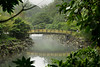A bridge with yellow railings crosses over a river on Jeju Island in Korea. The bridge is framed by branches in the jungle.