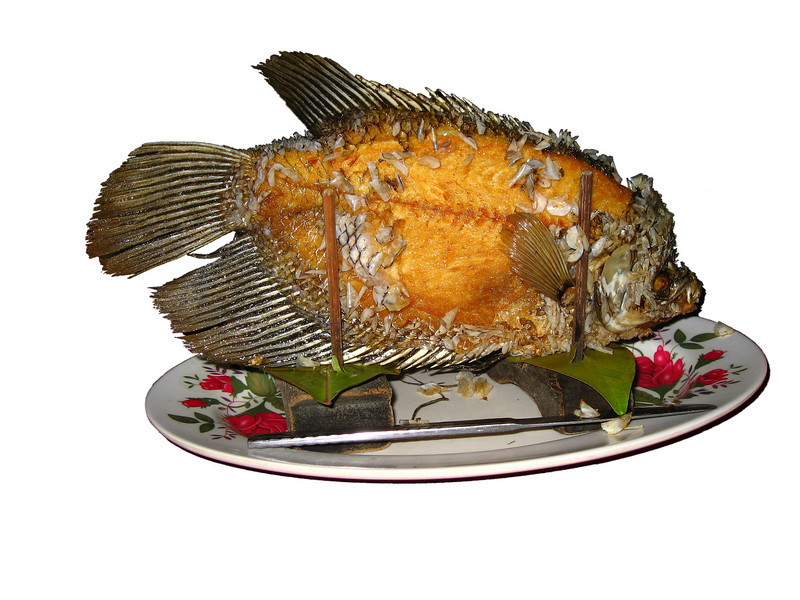 A fish, fried in oil, that has been prepared to be made into Vietnamese Spring Rolls. This pictures has been isolated to a white background.