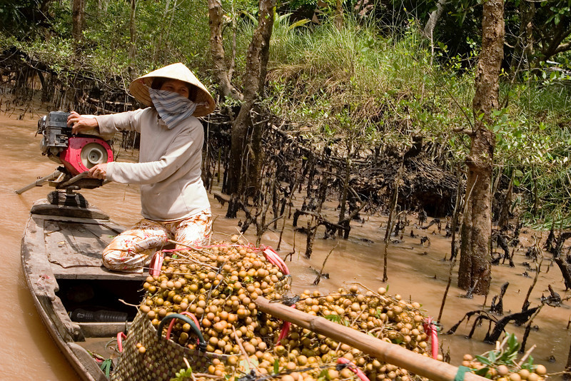 A Vietnamese woman bringing fruit to market on a fully loaded boat in the Mekong Delta. The scarf and hat are traditional clothing habits providing cover that are intended to protect the skin from the sun.
