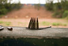 A partial clip of live ammunition for an AK-47 rifle waiting to be used on a firing range.