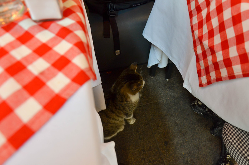 A cat that visited us during our lunch in Sultanahmet.