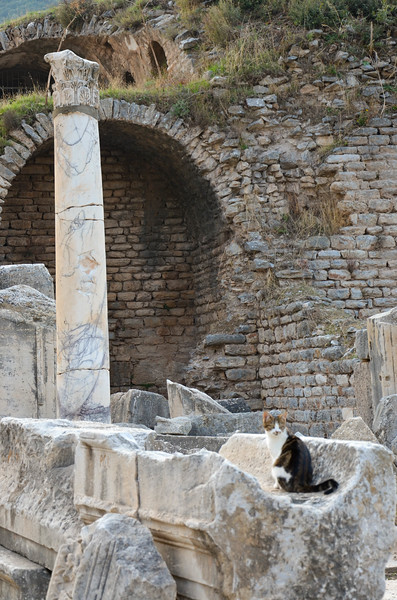 Our friendly cat in Ephesus.