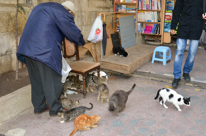 A man feeds a larger number of cats outside the Grand Bazzar.