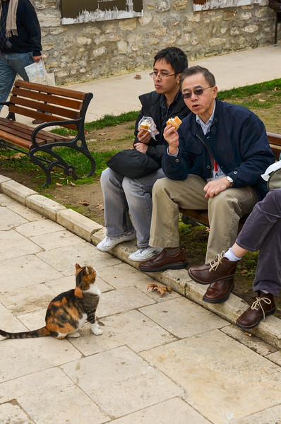 A cat begs for a snack from tourists in the First Courtyard at Topkapi Palace.