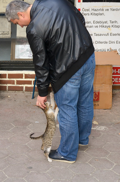 A man pets one of the many cats outside the Grand Bazaar in Istanbul.
