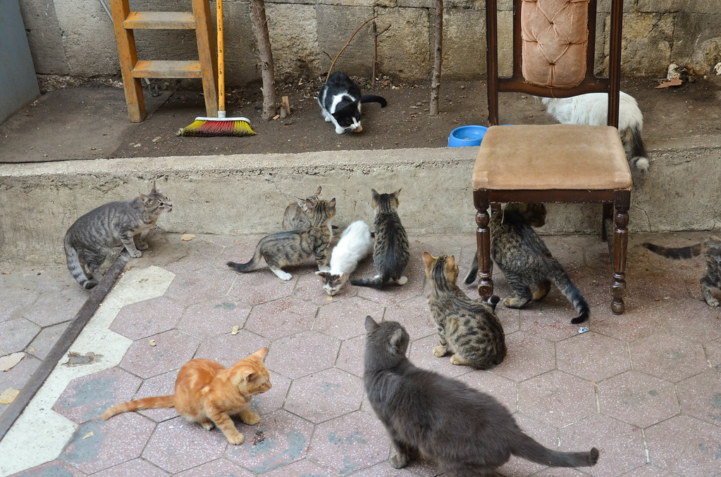 Cats outside the Grand Bazaar in Istanbul.
