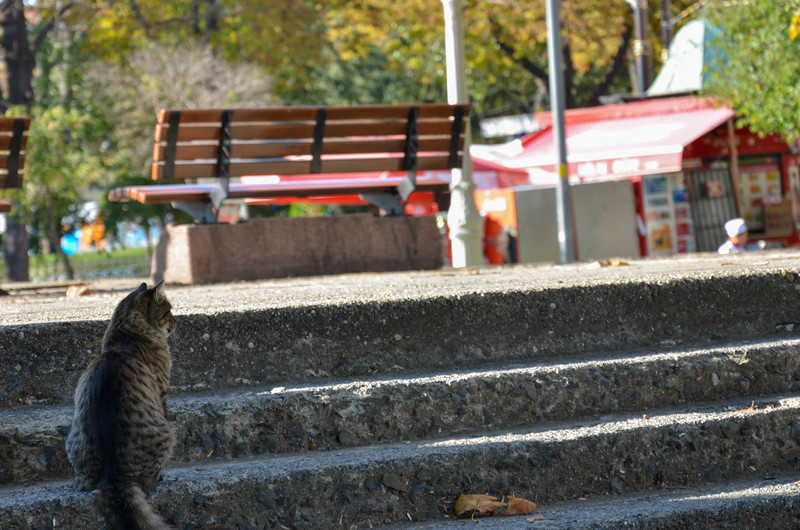 A cat in a park in Sultanahmet, Istanbul.