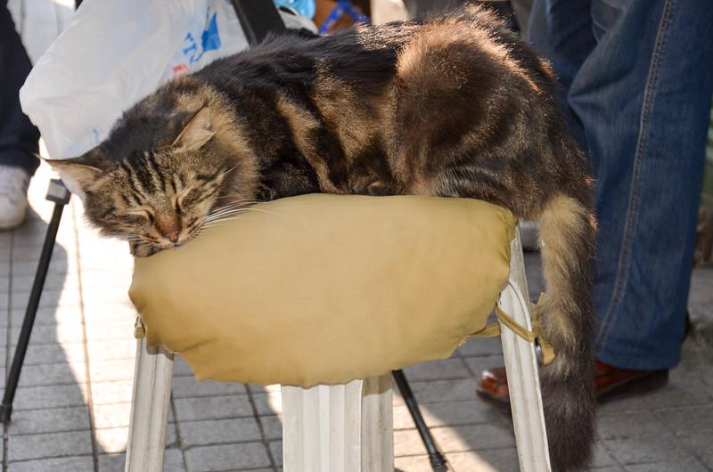 A cat in Galata, Istanbula.
