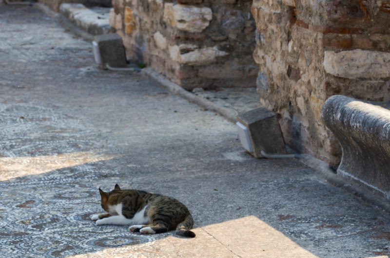 Cats in Ephesus ignore the signs prohibiting walking on the mosaic floors.