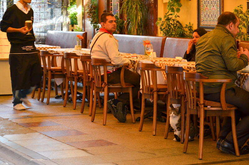 A cat in one of the Sultanahmet sidewalk cafés.