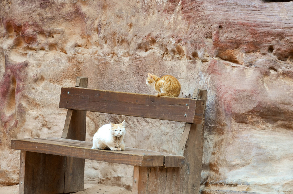 Cats on a bench in the plaza in front of the Treasury in Petra.