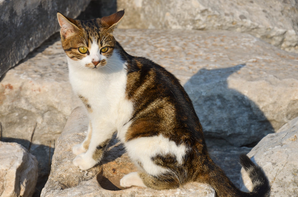 A young cat in Ephesus. This guy followed us around for a long time.