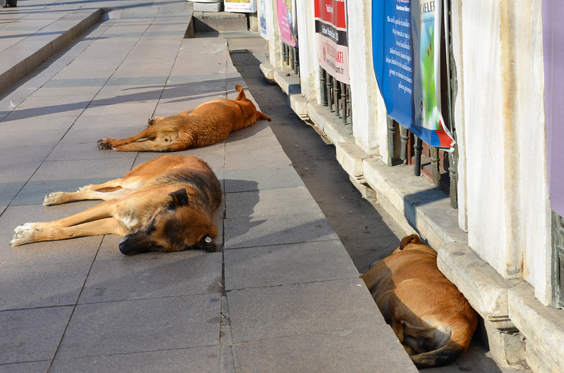 Sleepy dogs on a street in Sultanahmet on our first morning in Istanbul.