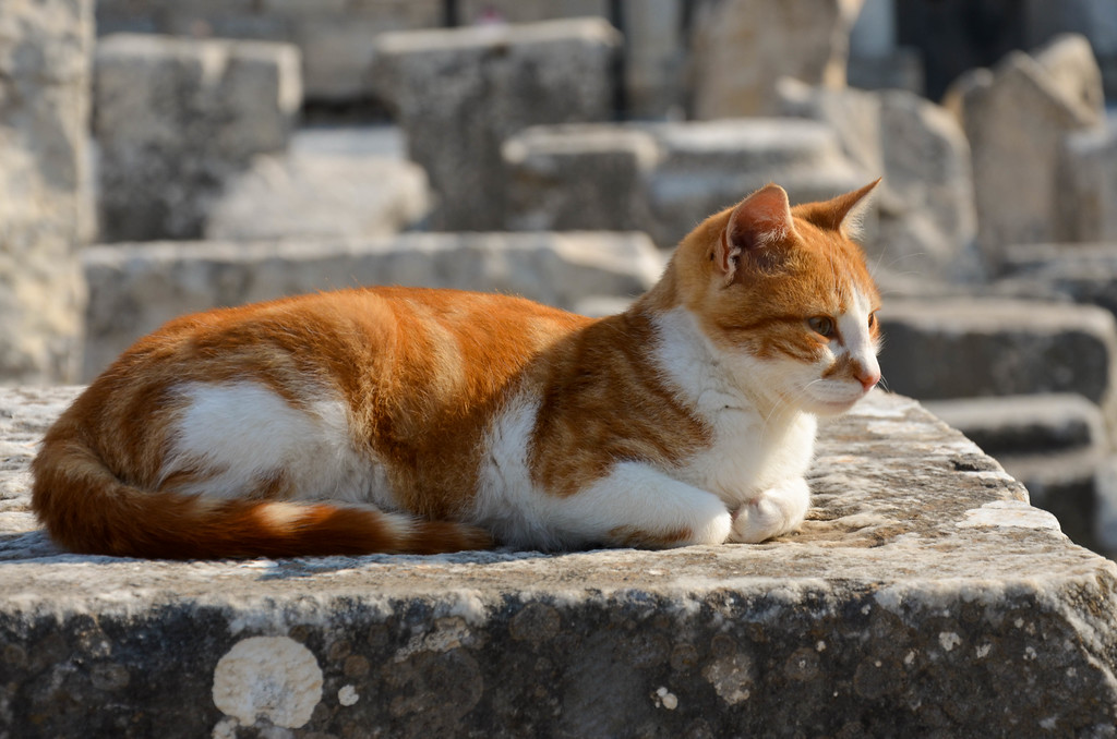 A cat lounging on the ruins in Ephesus.