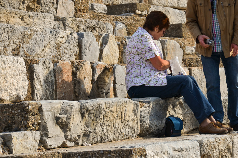 One of the many cats that lives in the ruins at Ephesus asks to share a tourist's lunch in the theatre.