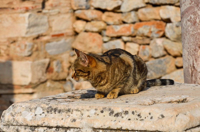 A cat in Ephesus.