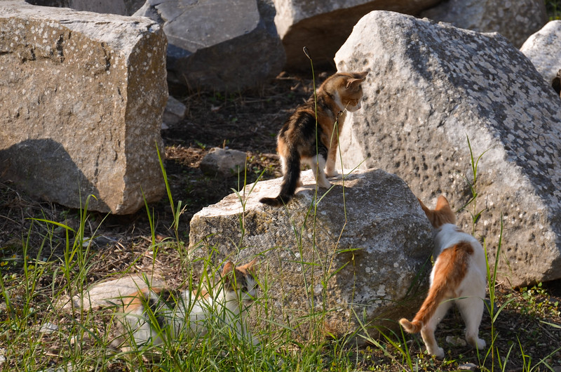Cats playing among the ruins at Ephesus.