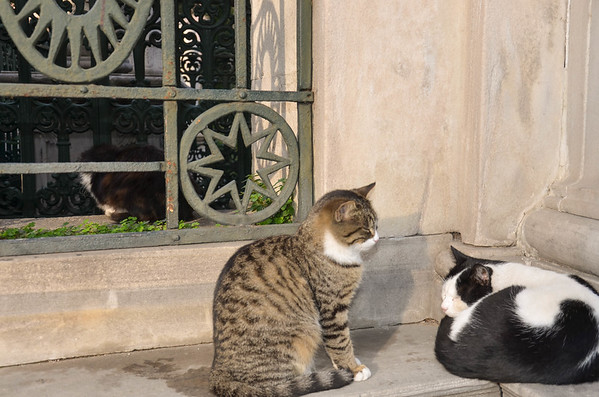Cats on a wall in Sultanahmet, Istanbul.