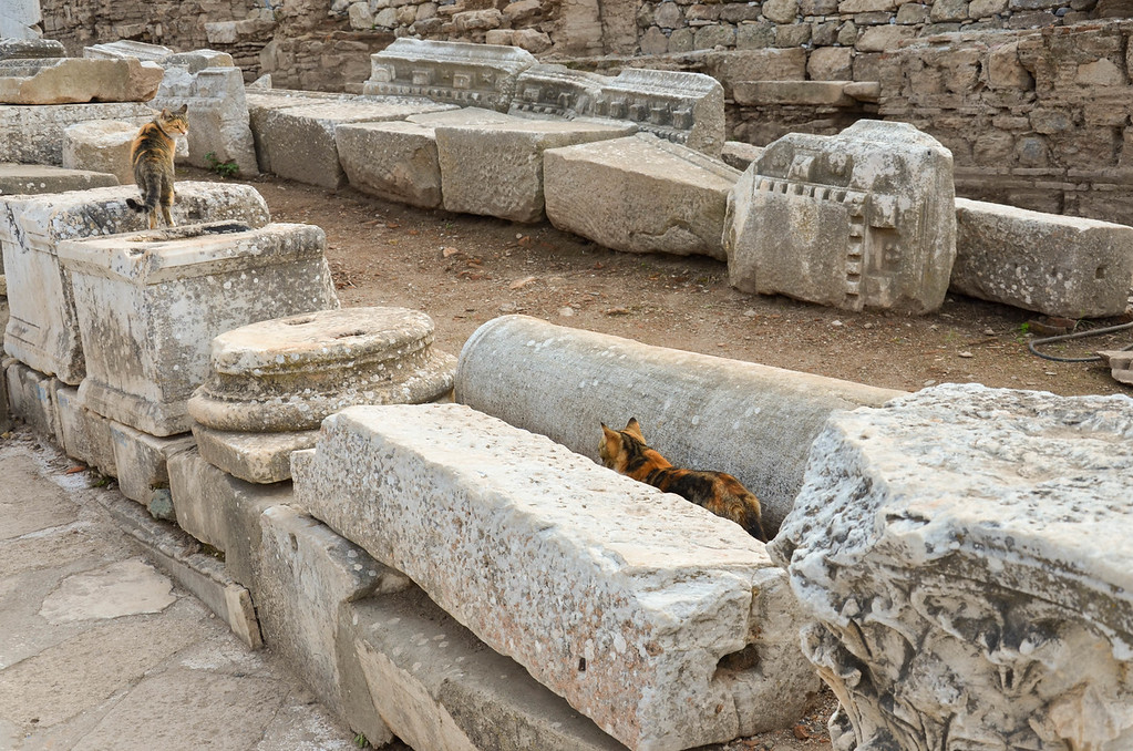 Cats walking in the ruins in Ephesus.