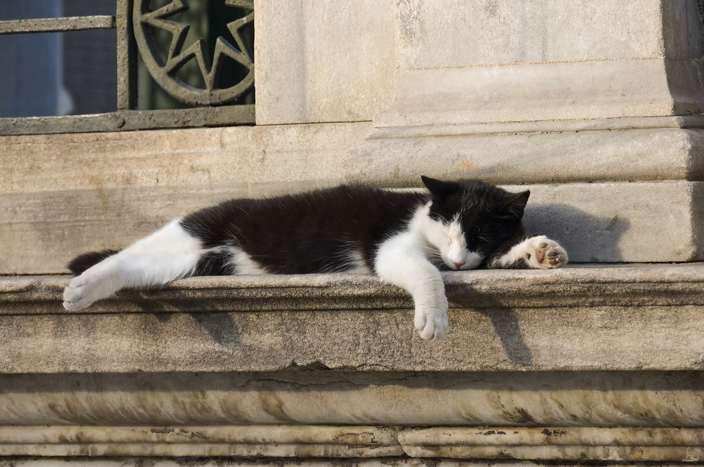 A cat sleeping on a wall in Sultanahmet, Istanbul.