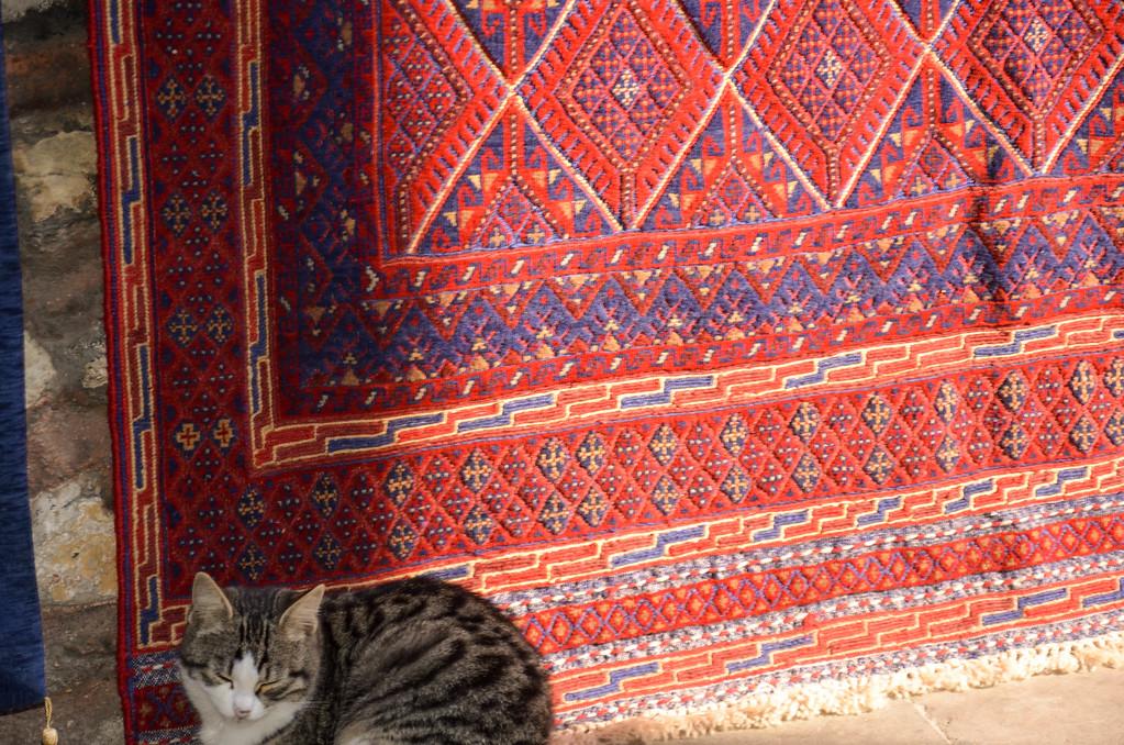 Cat, Istanbul