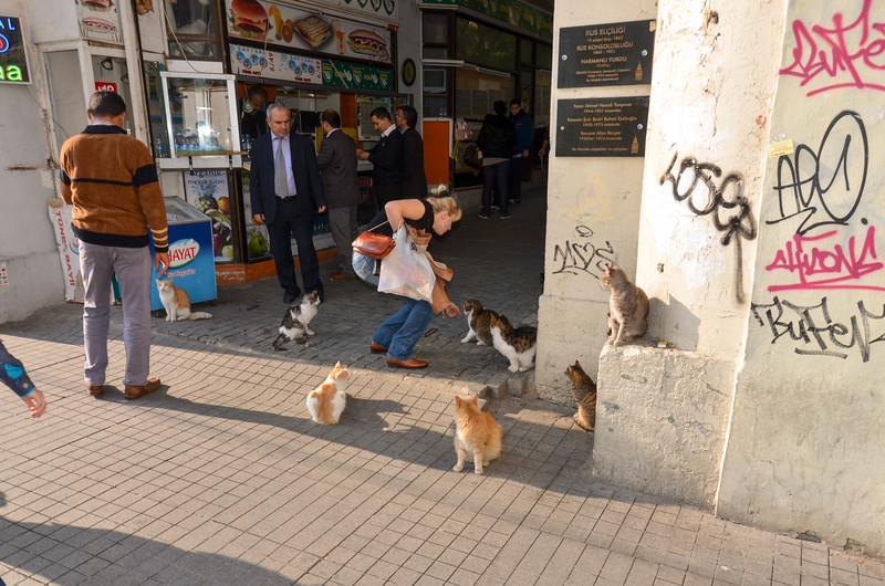 Cats, Istanbul