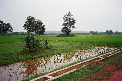Rice field, Vietnam 2005